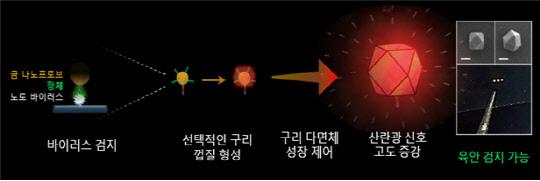 """""""식중독 꼼짝마""""구리 이용한 노로바이러스 신속 검출기술 개발"""